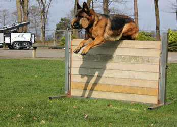 Trained German Shepherd