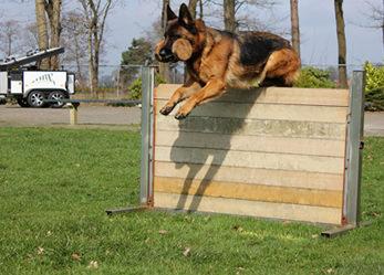 german-shepherd Training